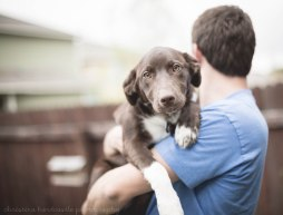 pretty dog being held