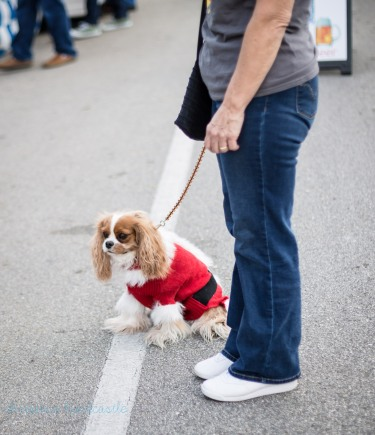 santa dog on leash