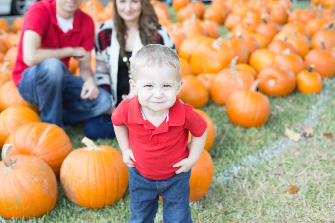 pumpkin patch houston