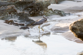 bird on beach in stradbroke