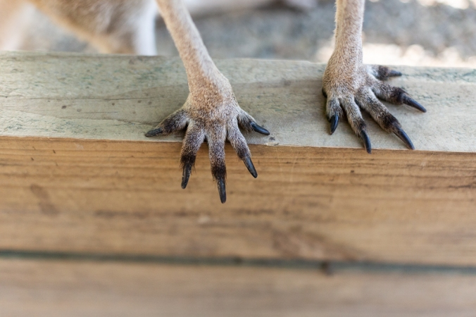 kangaroo feet on wood