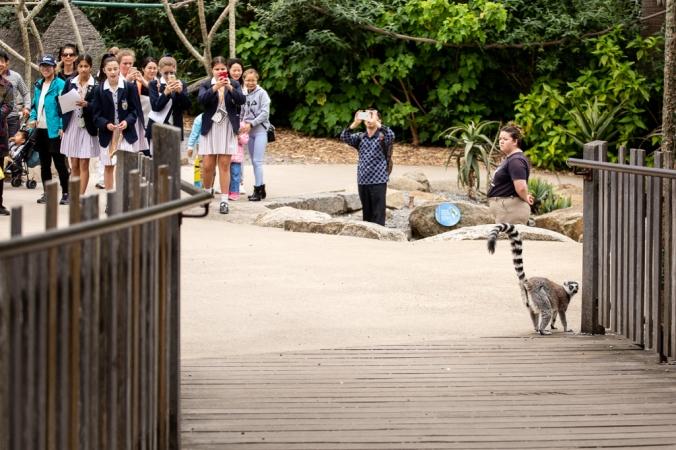 melb zoo-4