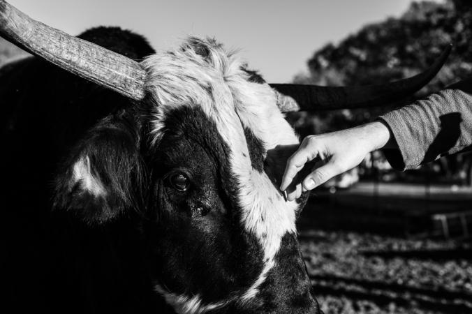 ranch-6